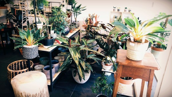 Plantastic Urban Plant Shop